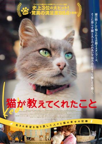 【12/23~】猫が教えてくれたこと
